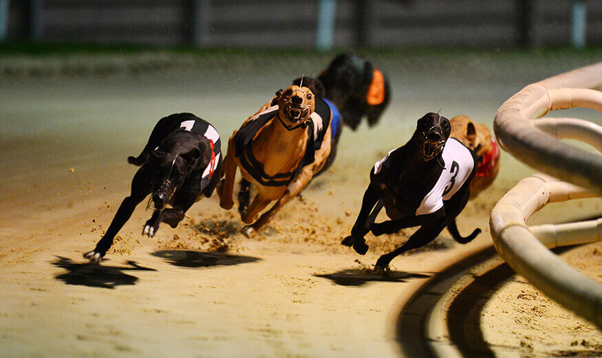 Irish greyhound st leger betting websites